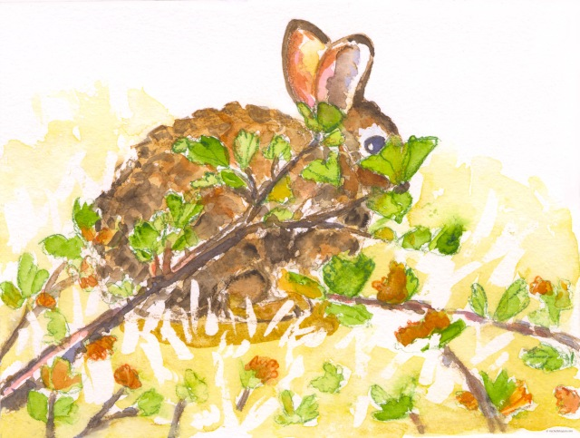 cottontail bunny 4-5-2020