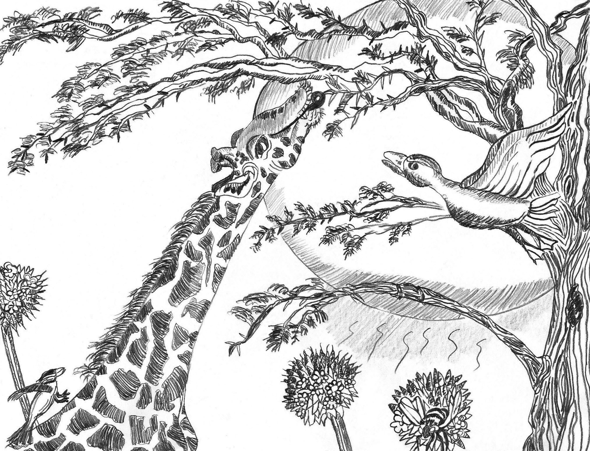 Giraffe summer